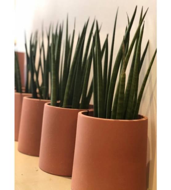 Sanseveria in bruine pot weinig water gemakkelijk te verzorgen ideale kotplant